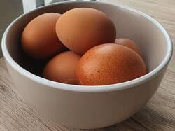 schaal-met-eieren